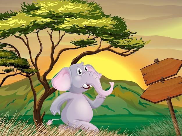 Un elefante che segue le insegne della freccia