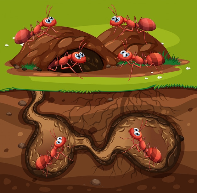 Un gruppo di formiche che lavorano nel foro