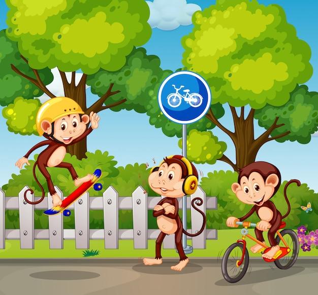 Un gruppo di scimmie e sport estremi