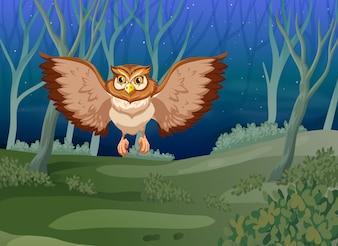 Un gufo che vola di notte