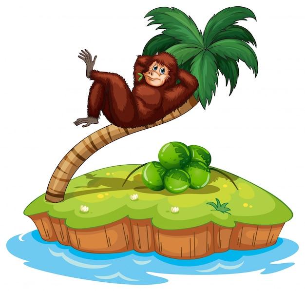 Un'isola con un gorilla