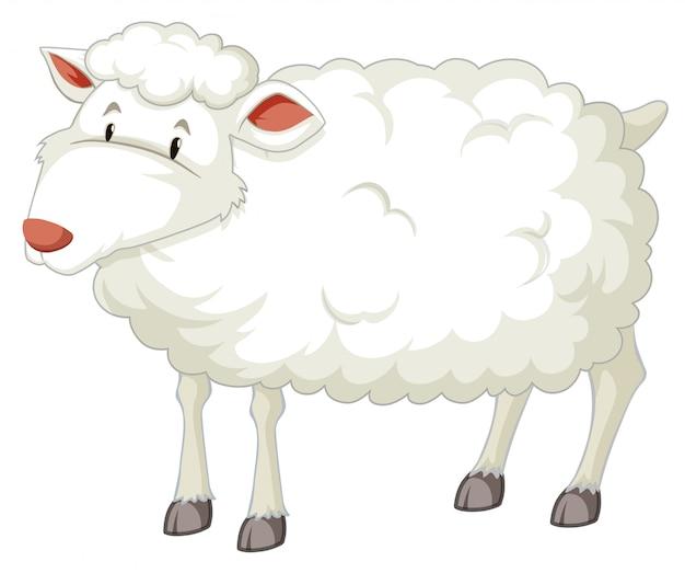 Un personaggio di pecora bianca