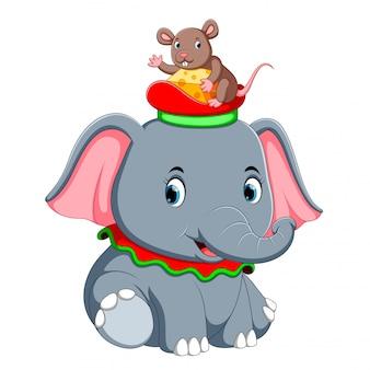 Un piccolo elefante gioca con un simpatico topo sul cappello
