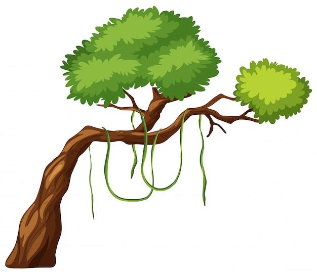 Un ramo di un albero
