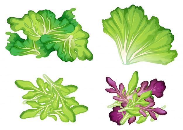 Un set di foglia di verdure