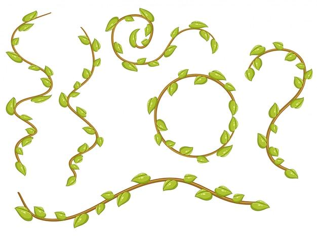 Un set di foglie di viti