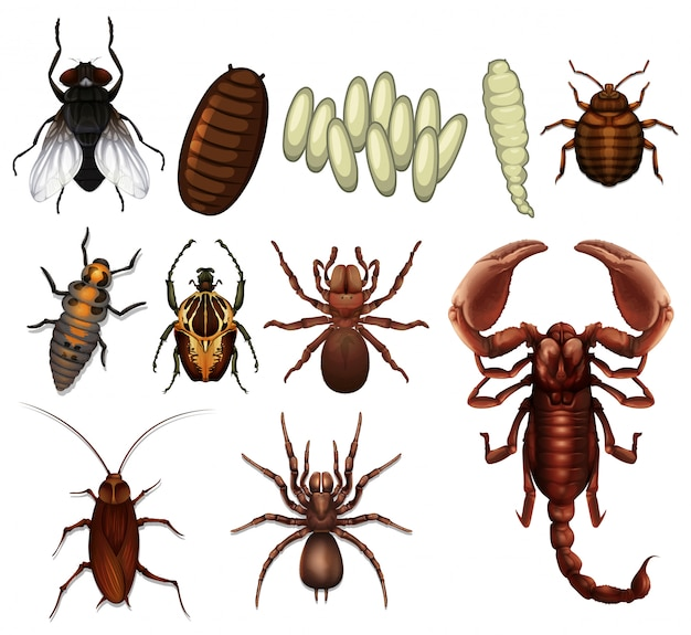 Un set di insetti