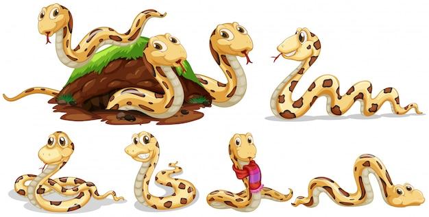 Un set di serpente su sfondo bianco