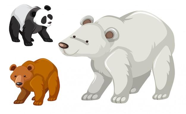 Un tipo di set di orsi