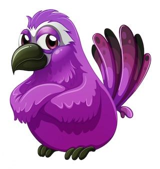 Un uccello dall'aspetto arrabbiato