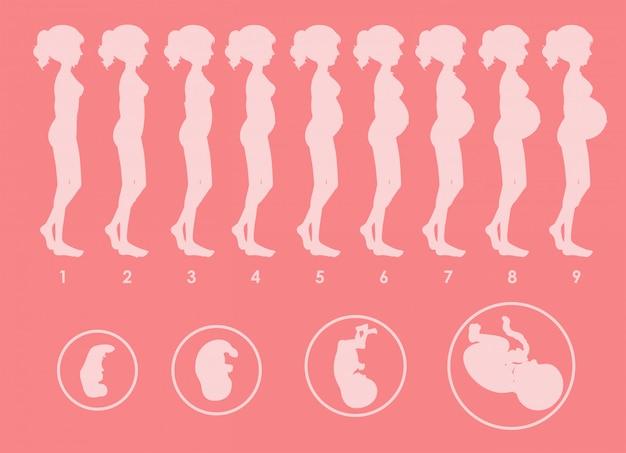 Un vettore di progressione incinta