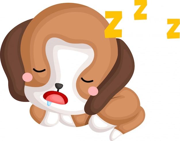 Un vettore di un beagle addormentato carino