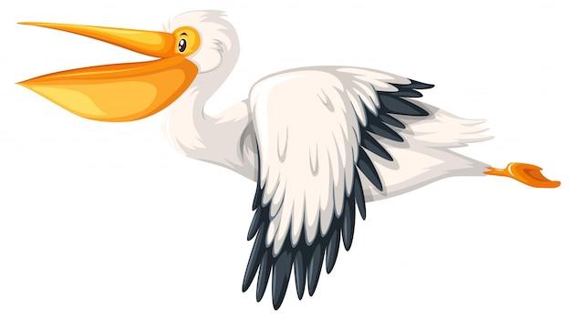Un volo del pellicano su fondo bianco