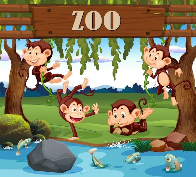 Una famiglia di scimmie nello zoo
