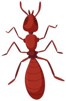 Una formica rossa isolata