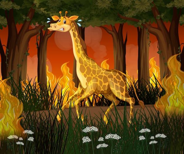 Una giraffa che fugge dalla foresta wildfire