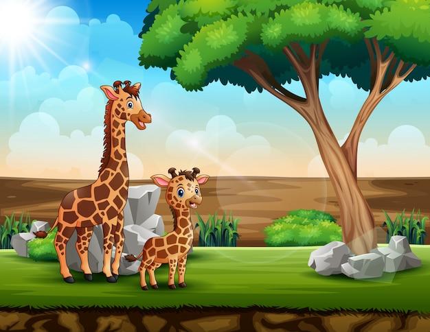 Una giraffa con il suo cucciolo in un campo di savana