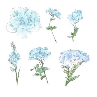 Una grande serie di acquerelli teneri fiori e foglie di ottima qualità