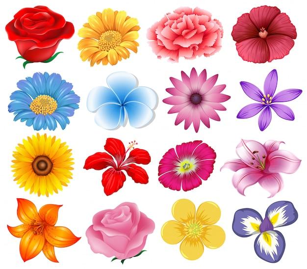 Una serie di bellissimi fiori