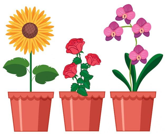 Una serie di fiori in vaso