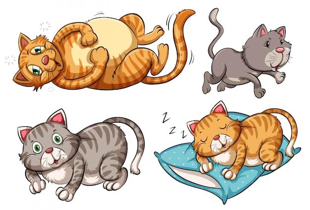 Una serie di personaggi di gatto