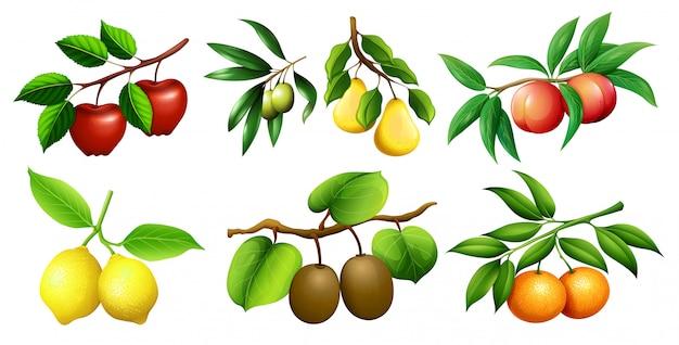 Una serie di rami di frutta