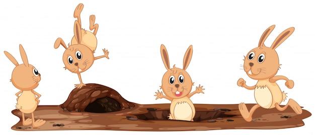 Una serie di simpatici conigli