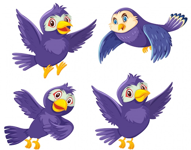 Una serie di uccelli su sfondo bianco