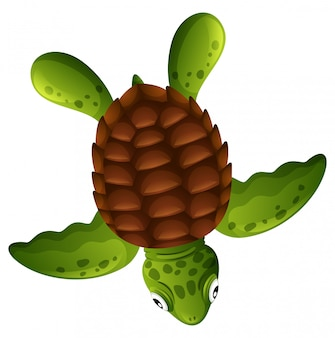 Una tartaruga di mare verde su sfondo bianco