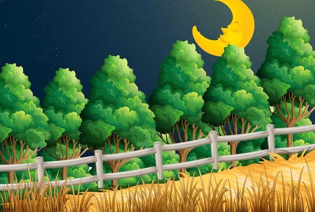 Una vista della luna addormentata nella giungla