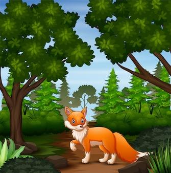Una volpe che cerca la preda alla scena della foresta
