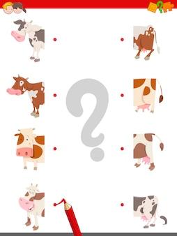 Unire le metà delle mucche