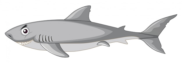 Uno squalo isolato