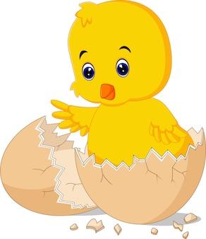 Uovo incrinato con uccello carino dentro