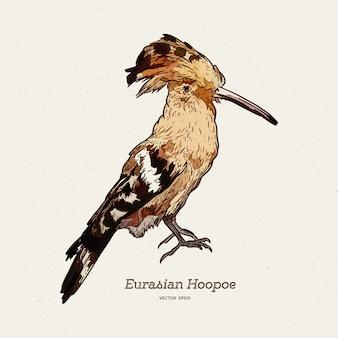 Upupa uccello disegnato a mano.