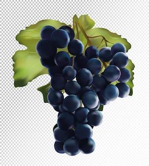 Uve fresche di colore blu scuro