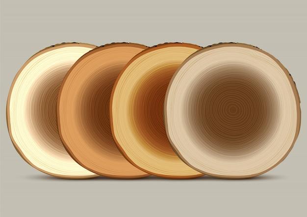 Varia sezione trasversale del ceppo di albero