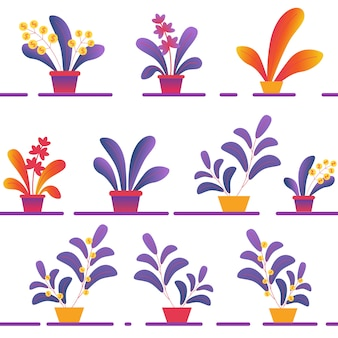Varie piante conservate in vaso del modello senza cuciture sugli scaffali su fondo bianco