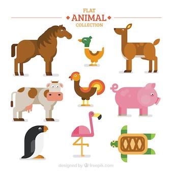 Varietà di animali piatti