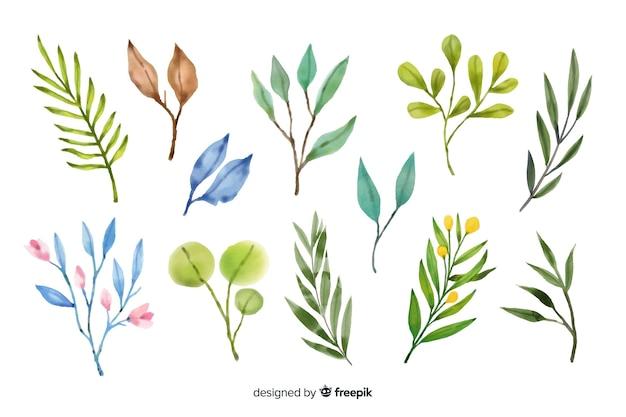 Varietà di foglie colorate su sfondo bianco