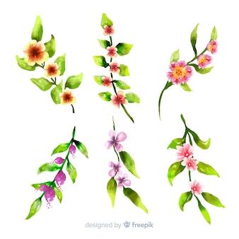Varietà di foglie e fiori variopinti su fondo bianco