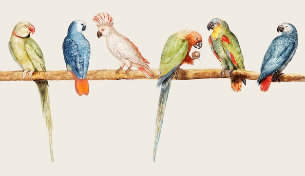 Varietà di pappagalli in stile vintage