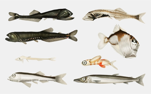 Varietà di pesci di alto mare