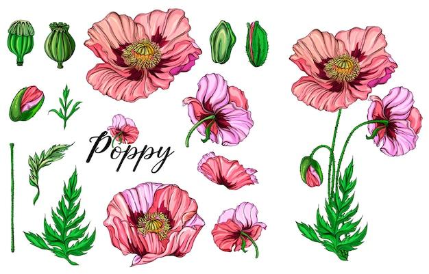 Vector colorati fiori luminosi