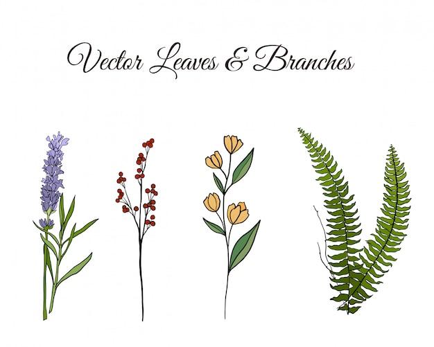Vector foglie e rami