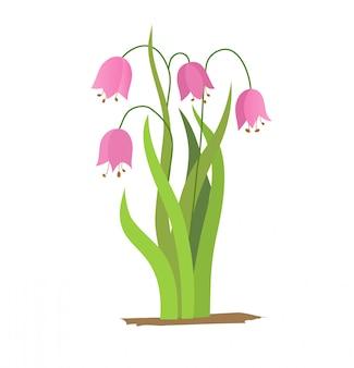 Vector i fiori di campana del disegno, l'elemento floreale isolato, illustrazione botanica disegnata a mano