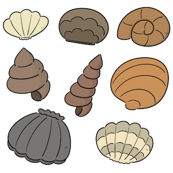 Vector set di conchiglia