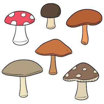 Vector set di funghi