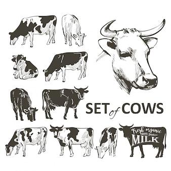 Vector set di mucche