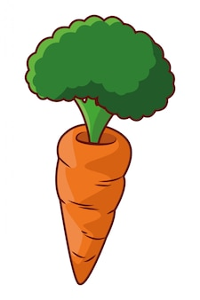 Verdura dell'alimento della carota sana isolata